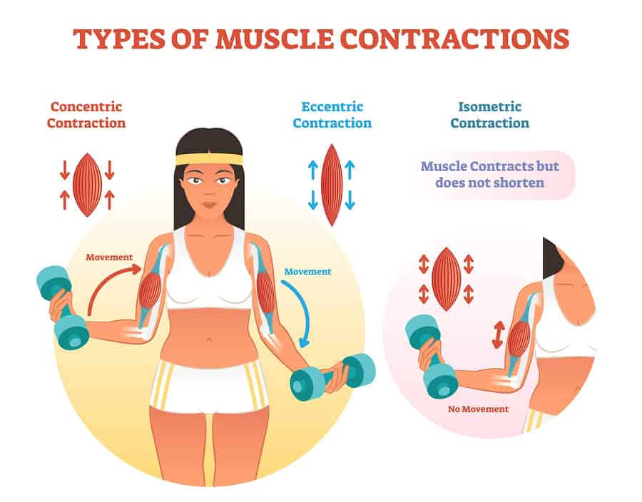 Muscle contractions scheme demonstrating different types of muscle contractions with arm cross section and fitness weight lifting exercise movement. Concentric, eccentric and isometric contraction types diagram.
