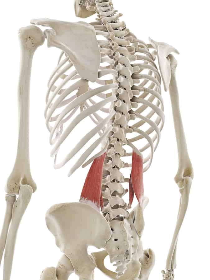 Anatomy image of quadratus lumborum as part of the core muscles.