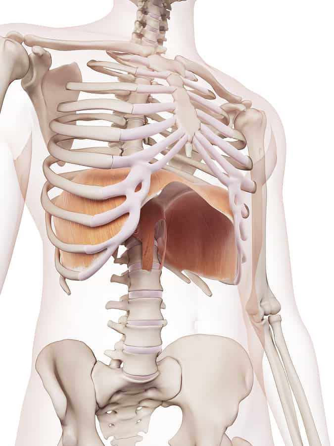 Diagphram muscle and how it integrates with core strength.