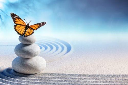 butterfly on rocks in a zen garden stress management activities