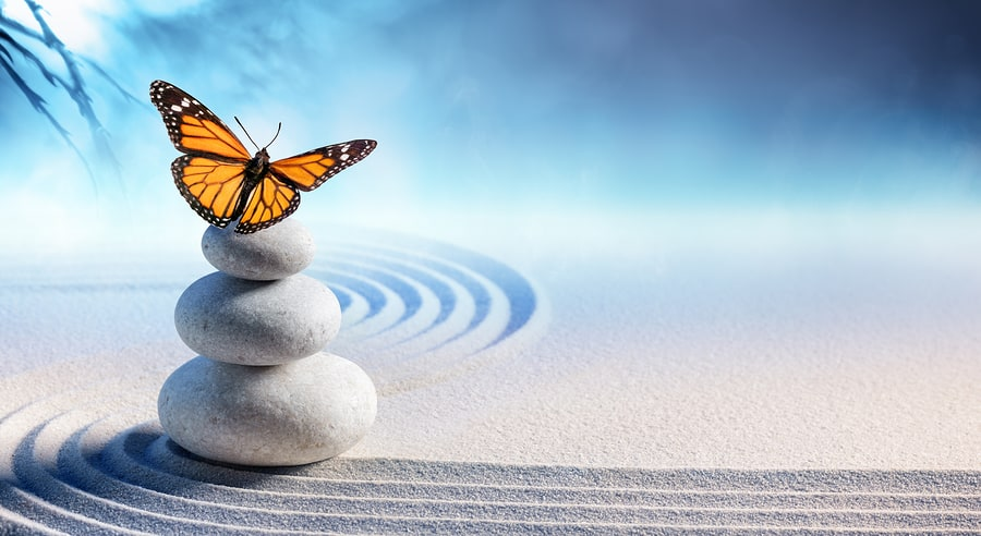 butterfly on rocks in a zen garden stress management activities